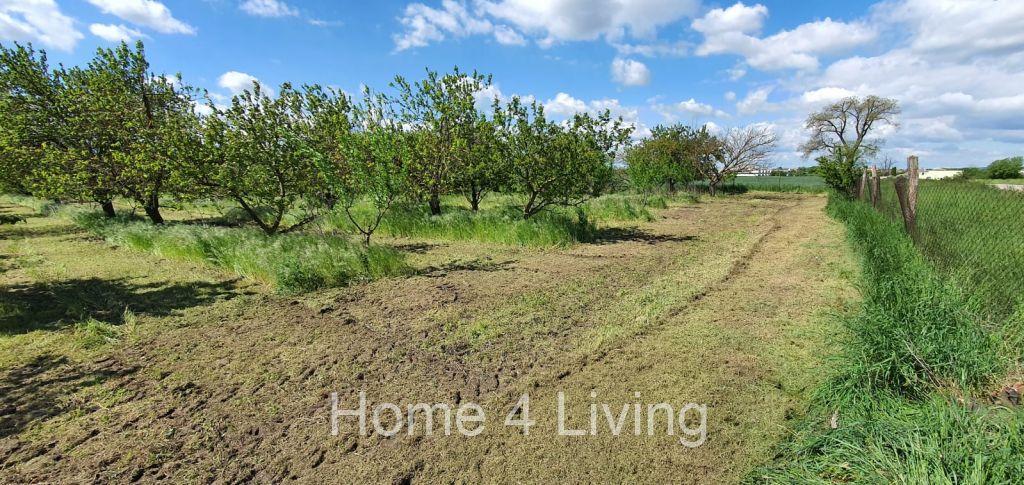 Prodej sadu, obec Vlasatice, studna, sklep k uskladnění ovoce